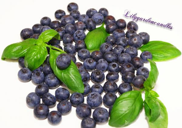 Basil Blueberry  Garden Light